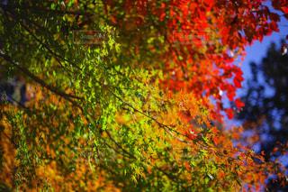 色とりどりの写真・画像素材[961295]