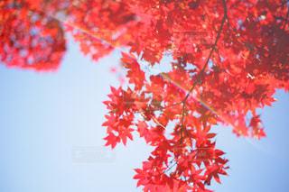 秋晴れの写真・画像素材[961298]