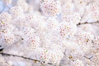 近くの花のアップの写真・画像素材[1157171]