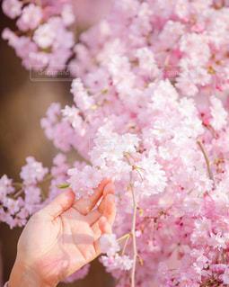 花を持っている手の写真・画像素材[1157176]