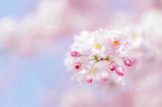近くの花のアップの写真・画像素材[1157177]