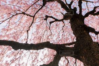 近くの木のアップの写真・画像素材[1157179]