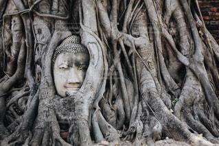 頭だけの仏像の写真・画像素材[1178714]