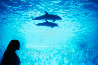 海の写真・画像素材[2144968]