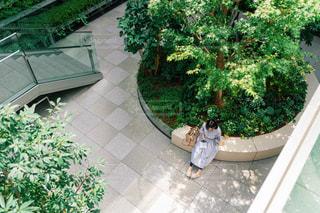 庭の緑の植物の写真・画像素材[2440495]