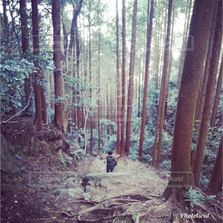 森の中を歩く子供の写真・画像素材[961925]
