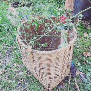 背負い籠に入った草の写真・画像素材[962037]