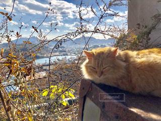 尾道の野良猫の写真・画像素材[961781]