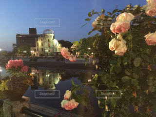 原爆ドームと薔薇の花の写真・画像素材[961817]