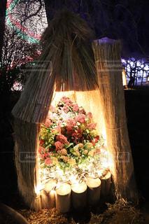 冬の花の写真・画像素材[963457]