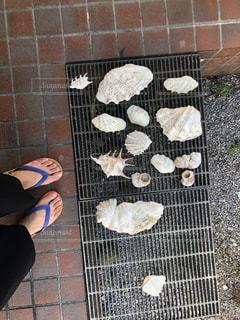 貝殻の写真・画像素材[962157]