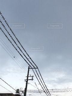 電線を占領する鳥の大群の写真・画像素材[962325]
