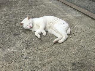 猫の写真・画像素材[12248]