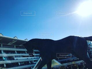 馬の陽の写真・画像素材[962735]