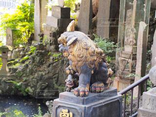 狛犬の写真・画像素材[962893]