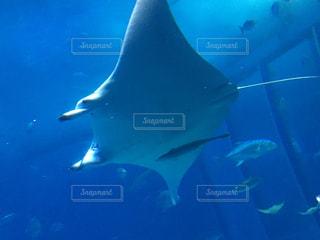 水面下を泳ぐ魚たちの写真・画像素材[963300]