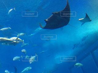美ら海水面下を泳ぐ魚たちの写真・画像素材[963301]