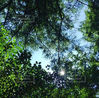 森の木漏れ日の写真・画像素材[963421]