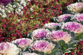 近くの花のアップ - No.971354