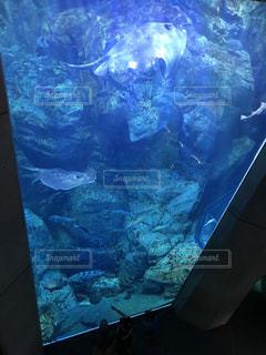 テレビの水中ビューの写真・画像素材[963928]