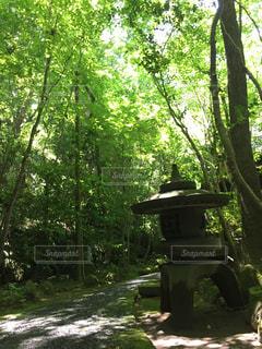 フォレスト内のツリーの写真・画像素材[964191]