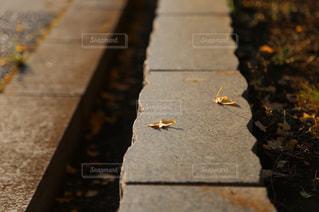 秋の写真・画像素材[1401741]