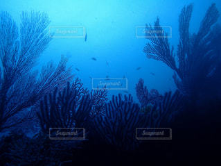 暗闇の中のサンゴの写真・画像素材[1401743]