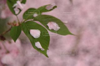 植物の接写の写真・画像素材[2103493]