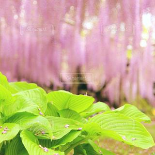 花のクローズアップの写真・画像素材[2103494]