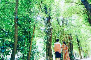 フクギ並木道のカップルの写真・画像素材[2419391]