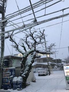 雪に覆われた鉄道の写真・画像素材[971762]
