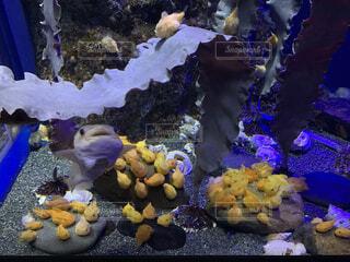みんな魚の写真・画像素材[4531741]
