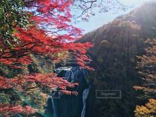 峡谷の絵画の写真・画像素材[964515]
