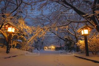 雪化粧した神社の参道。の写真・画像素材[987886]