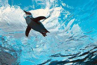 空飛ぶペンギンの写真・画像素材[965796]