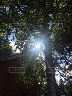 森の大きな木の写真・画像素材[964889]