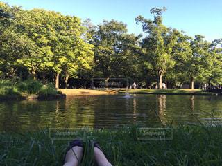 水辺でピクニックの写真・画像素材[965055]