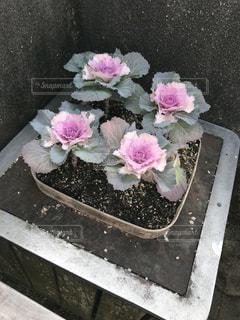 ピンクの植物の写真・画像素材[968335]