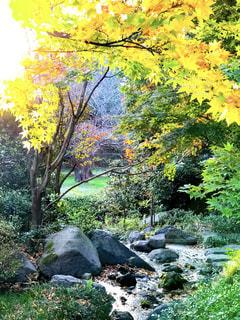 日本庭園の夕方の写真・画像素材[965266]