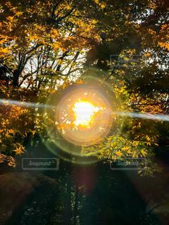 木立の中の光の写真・画像素材[965272]