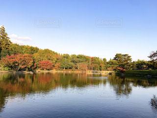 木々に囲まれた静寂の池の写真・画像素材[965276]