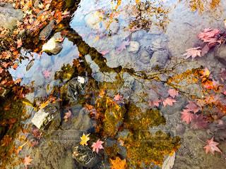 秋の池の写真・画像素材[965281]
