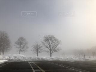 雪の側に木と太陽と朝靄の写真・画像素材[965305]