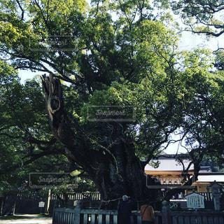 公園の大きな木の写真・画像素材[965633]