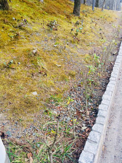 草と木とパスの写真・画像素材[1099498]