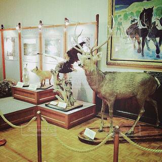 【北海道の旅写真】北海道庁旧本庁舎🎌の写真・画像素材[984662]