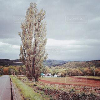 【北海道の旅写真】パッチワークの路・ケンとメリーの木🌲 - No.988832