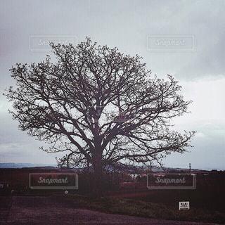 【北海道の旅写真】パッチワークの路・セブンスターの木🌳 - No.988835