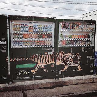 【北海道の旅写真】旭山動物園𓅔の写真・画像素材[991107]