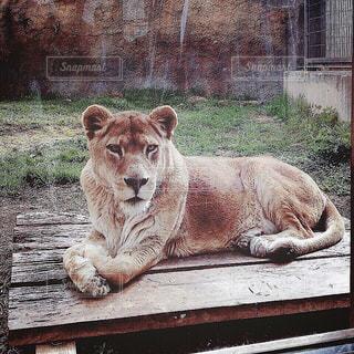 【北海道の旅写真】旭山動物園𓅔 - No.991565